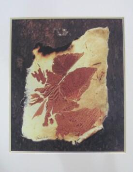 'Amber Leaf'